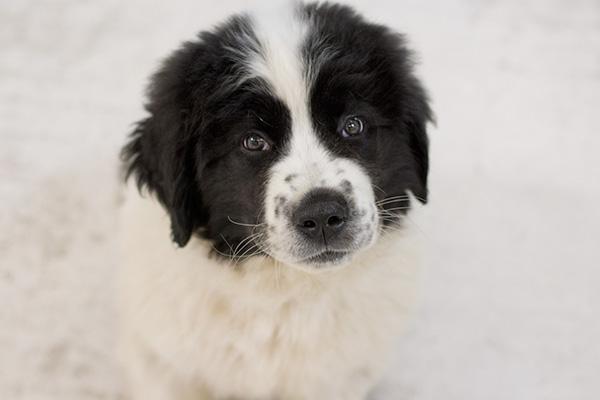 Foto Lanade Hund 1