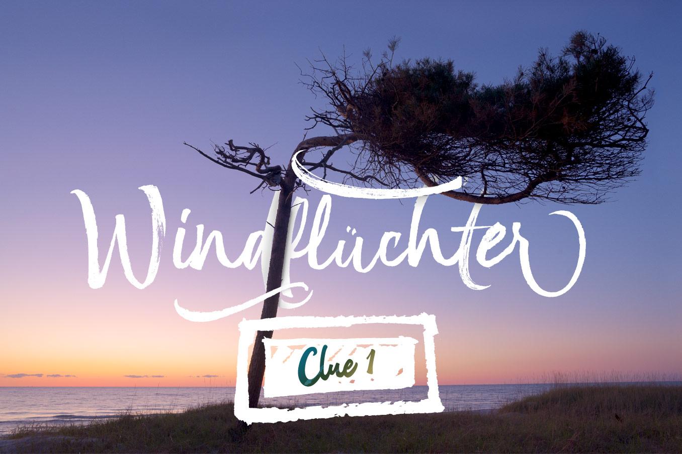Windflüchter M-CAL Clue 1