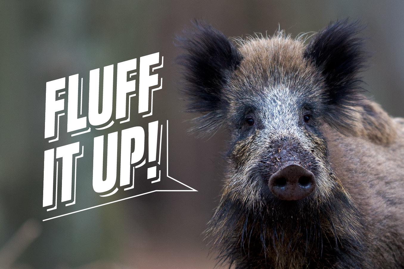"""Bild für Beitrag """"Fluff It Up"""" 1"""
